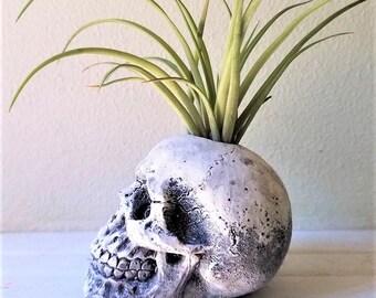 Skull planter, air plant holder, human skull sculpture