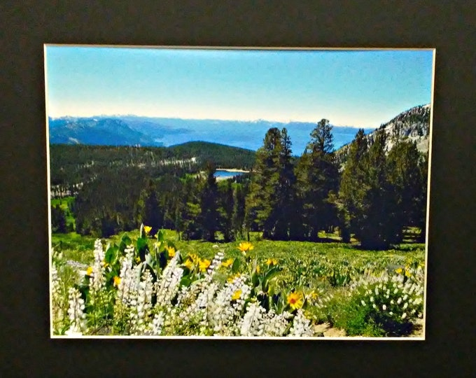 NATURE'S MOUNTAIN GARDEN frame-ready Photographic Wall Art by Pam Ponsart of Pam's Fab Photos
