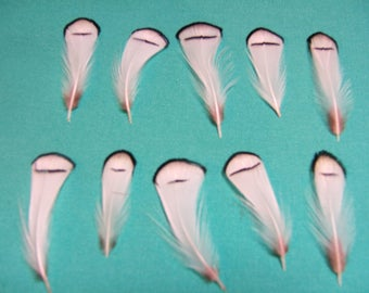 40 CHUKKARS FEATHERS
