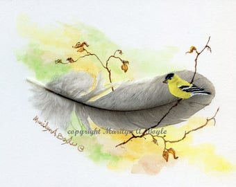 HAND PAINTED FEATHER; American Goldfinch, grey feather, wall art, 5 x 7 inches framed, wood frame, one of a kind,