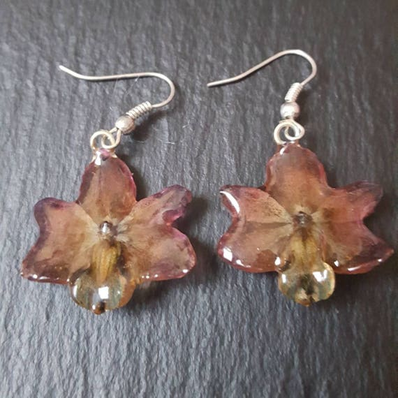 Real orchid Rhynchocentrum flower earrings in brown