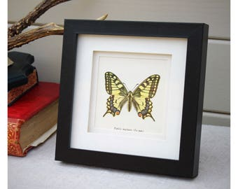 Framed Vintage Butterfly Print