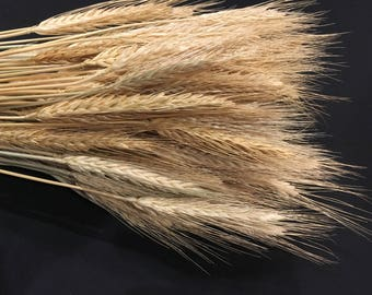 BLONDE WHEAT DRIED - 6 bunches/case