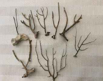 Brown Sea Fan Branches (Set of 8)