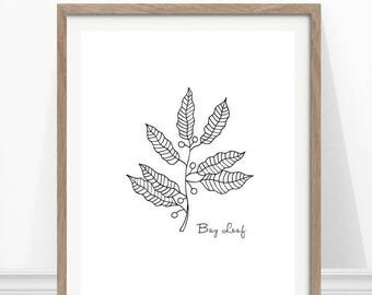 Bay Leaf Print, Kitchen Herb Print, Hand Drawn Herb, Kitchen Wall Art, Herbs and Spices