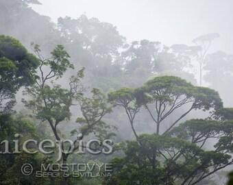 Misty jungle forest at the fog downloadable digital art print