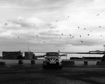 Bird Photography, Bird Wall Art, Bird Print, Bird Photo, Flock Of Birds, Car Print, Nissan Print, Newcastle, Tynemouth, North Shields