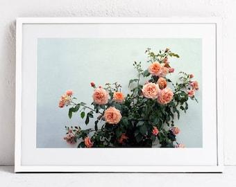 Floral Wall Art Print, Pink Roses Photography Print, Flower Photo, Botanical Digital Print, INSTANT DOWNLOAD Printable Art, Bedroom Wall Art