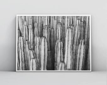 Cactus Print, Black and White Photography, Desert Wall Art, Succulent Print, Botanical Photo, Printable Poster, Home Decor, Digital Download