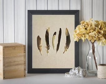 Feather Print, Feather Picture, Feather Wall Art, Feather Prints, Feather Pictures, Real Feathers Print, Feather Photo, Feathers Art Print