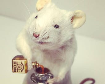 Taxidermy Mouse with RUM and teacup ~ oddities, curio, curiosities