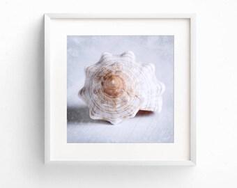 Sea Shell Art, Beach House Decor, Coastal Decor, Bathroom Wall Art, Square Print Set, Nautical Art, Fine Art Print, Coastal Wall Art