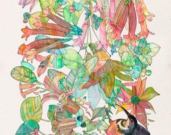 Art Print - Eastern Spinebill Honeyeater