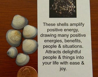Whispers from the Sea Violet Clam Shells Amplify Positive Energy