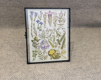 Vintage framed botanical drawing, flower illustrations, botanical print, floral, in glass frame, Green leaves Daisies Yellow Purple