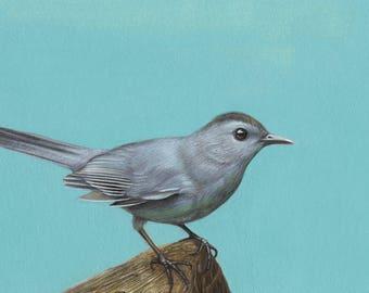 Little bird (Grey Catbird)