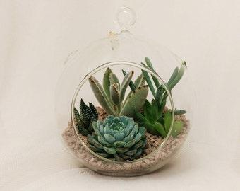 Queen around the Globe,  Succulent terrarium with beige rocks, sleek indoor home decor, modern hanging glass, diy kit, cactus garden