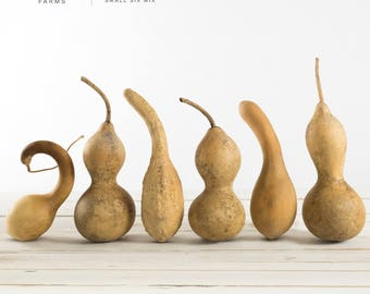 Dried Gourds | Spoons and Bottle Shapes