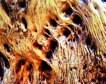 Nature Photography Macro tree bark photo print