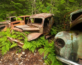 Old rusty trucks, Opal creek, Old truck decor, Vintage trucks, Rustic decor, Wall art, Garage decor, Print, Forest, Weathered, download,