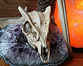 Muntjak Deer Skull l Deer Skull l Skull Carving l Crystal Skull l Viking Home Gothic Decor l Altar Tool l Witchcraft