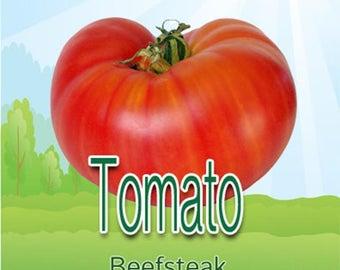JUMBO PACK-Beefsteak Tomato (100 + Seeds)