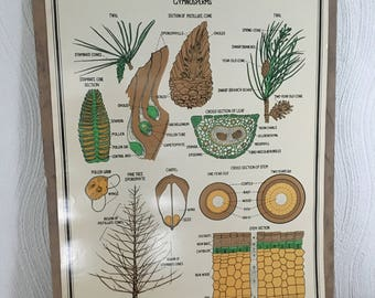 1940s Vintage Educational Botanical Prints