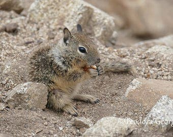 Baby Squirrel Photography, Animal Photo, Wildlife Photography, Squirrel Photography, Beach Photography, Nature