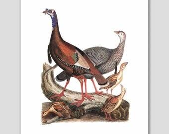 "Turkey Art, Bird Print (Woodland Folk Art, Natural History Decor) -- ""Wild Turkeys"" 19th Century"