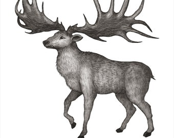 Irish Elk  -  A4 art print