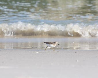 Ready to Hang Canvas Gallery Wrap, Sandpiper Photograph, Coastal Wall Art, Canvas Print, Ocean Photo, Beach Decor, Shorebird Photograph