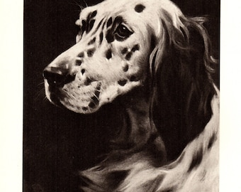 Antique ENGLISH SETTER Dog Print 1940s Vintage English Setter Illustration Artwork Vintage Dog Gallery Wall Art Gift for Dog Lover 2868