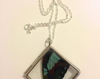 Real Insect Wing Necklace. Broad green-banded swallowtail butterfly. Double Sided Glass Locket.