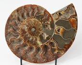 "large ammonite fossil w/ druzy quartz crystal, 7"" polished ammonite half display stone, beach decor, bohemian decor, nautilus shell fossil"