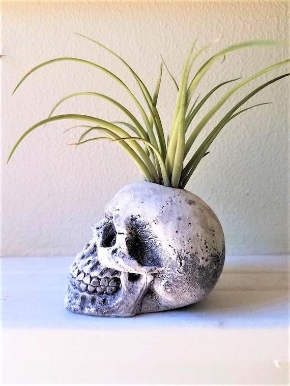 Skull planter, air plant holder, human skull sculpture, anatomical home accent