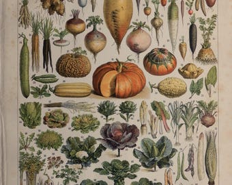 "1899.VEGETABLES.Beautiful print.Chromolithograph.118 years old print.Vintage illustration.Lithograph in color.12.1x9.1"" or 23x31cm."