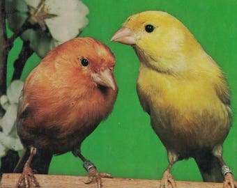 1979 Canaries edited by Paul Paradise ~~ FREE SHIPPING in the USA!