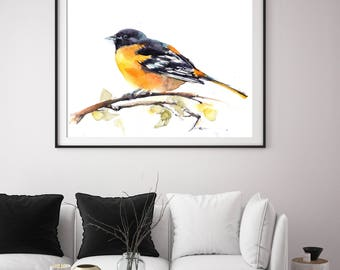 Baltimore Oriole Bird art print, bird watercolor painting print, black and yellow, bird art, bird wall art print, giclee print of bird