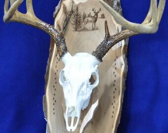 Deer Mount Board ~ European Mount ~ Deer Hunting ~ Deer Skull Mount ~ Gift For Hunter ~ Antler Mount ~ Antler Plaque ~ Hunting ~ Deer Decor