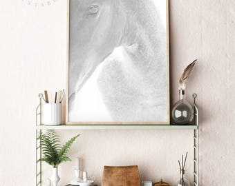 Horse Print, Horse Photography, Black and White Horse, Horse Printable, Horse Wall Art, Horse Photo, Modern Wall Art, Boho Print, Download
