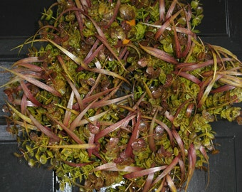 EUCALYPTUS GRASS WREATH  mixed grass w/laser glitter