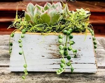 Succulent Arrangement in Rustic Wood Planter