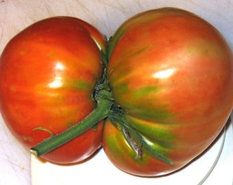 Bezrazmernyi Heirloom Giant Tomato Seeds