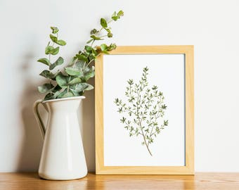 Thyme - thyme painting - herb painting - thyme watercolor - home decor painting - thyme - kitchen art - dining room art - food art - herbs