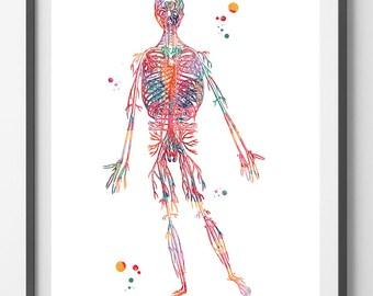 Human Circulatory System Arteries Watercolor Print Anatomy Art Poster Medical Art Blood Vessels Illustration Physiology Print Wall Art Gift