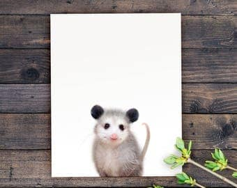 Baby animal prints, Opossum print, PRINTABLE art, Animal print, Nursery decor, Animal art, Baby animals, Nursery wall art, Woodland animals