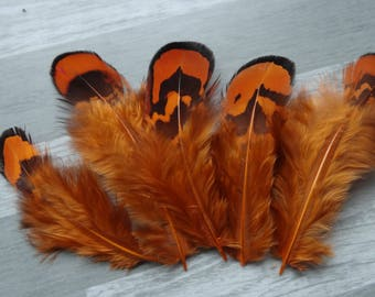 Set of 10 natural Golden pheasant feathers dyed orange