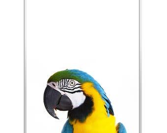 Parrot Print, Parrot Wall Art, Bird Print, Parrot Photo, Tropical Decor, Macaw Print, Instant Download, Parrot Poster, Tropical Bird Art