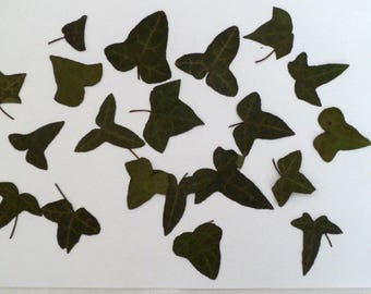 IVY LEAVES PRESSED for card making.
