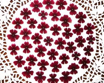 Dried pressed flowers, real dried  dark red verbena flowers  30 pcs.